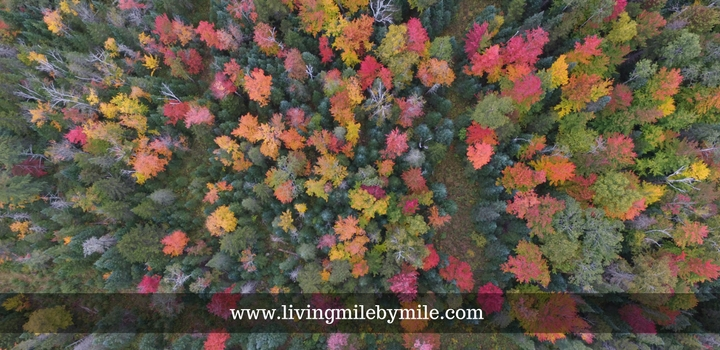 lmbm-autumn-in-the-northeast